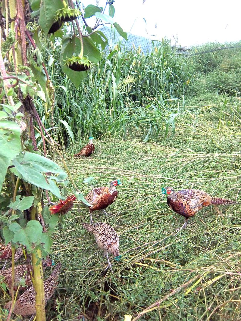 Indian Lake Game Birds & Hatchery, Indian Lake Quail Eggs